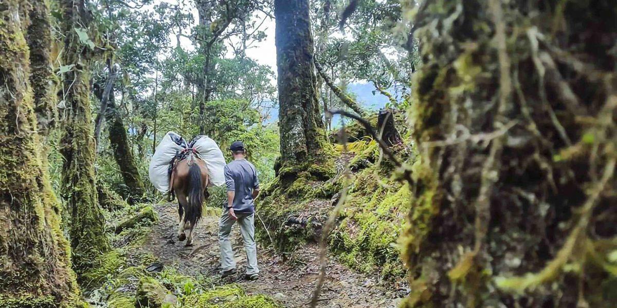 Cerro Chirripo #12