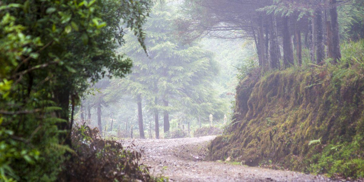 Cerro Paraguas #1