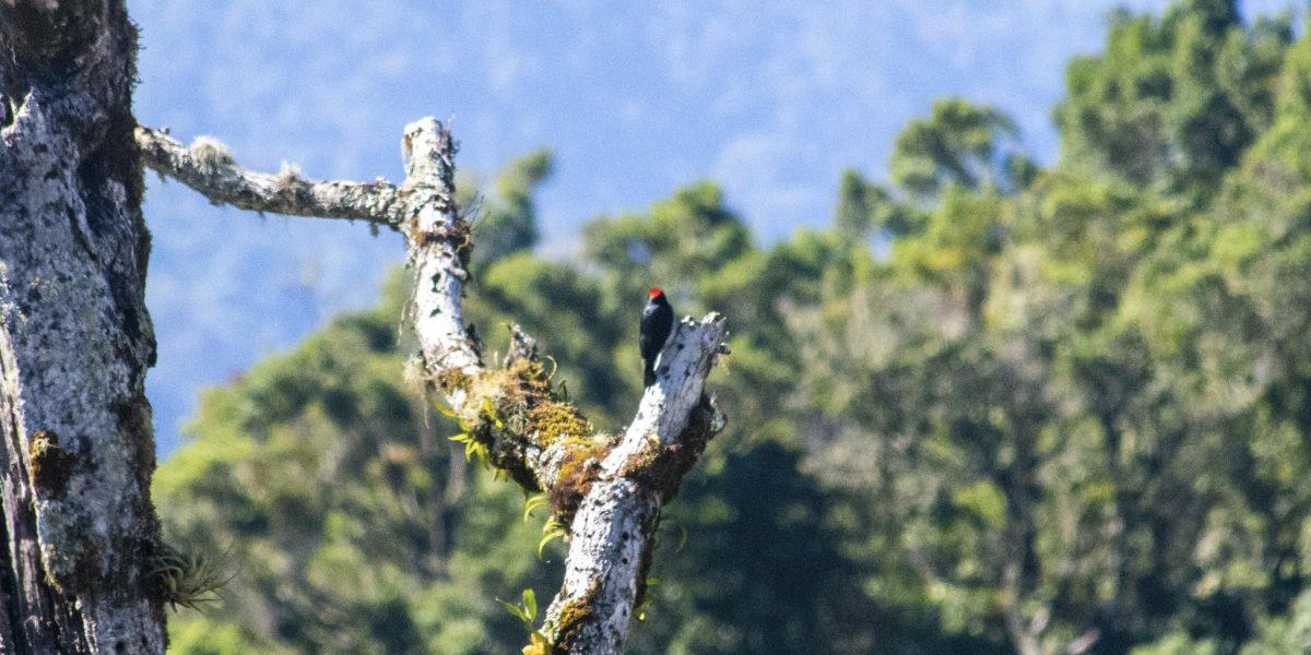 Cerro Paraguas #11