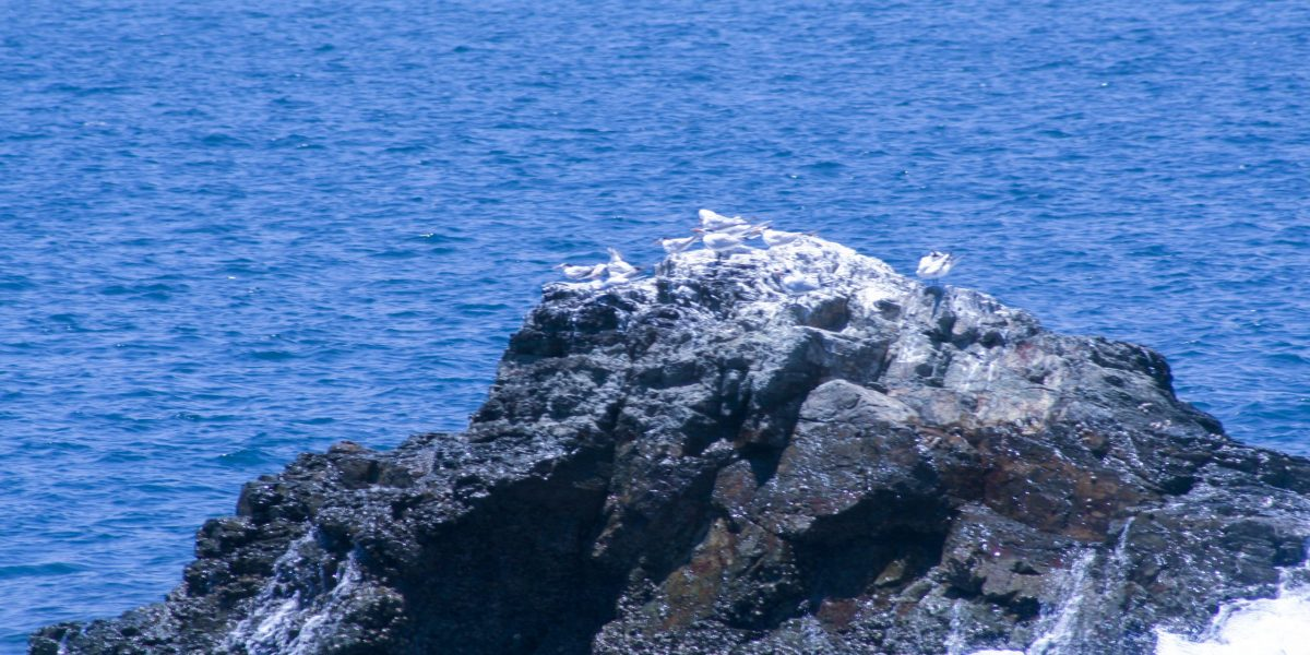 Isla Tortuga 1