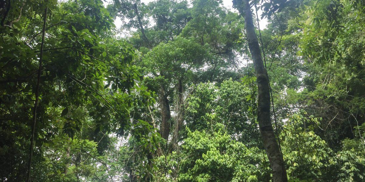 La Ceiba Ecoaventura #7
