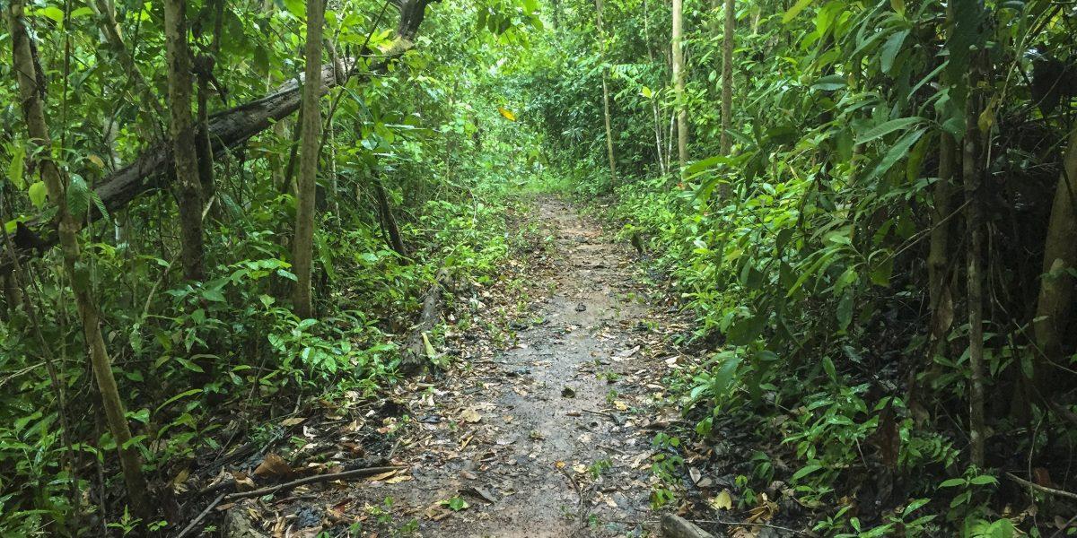 La Ceiba Ecoaventura #9